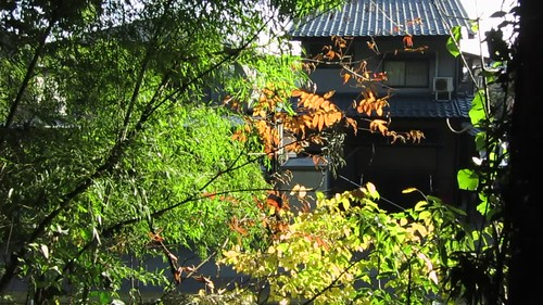 fall light and color at Atago's east shrine