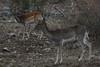 27102017-DSC_0082.jpg (stephan bc) Tags: cazorla zoogdieren regioandalucia reis