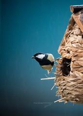 016_0558web (Isa Galimage Photography) Tags: naturebynikon bird