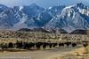 Owens Valley-128 (Denise Noelle Photography) Tags: owensriver bishopca sierranevadamountains monolake lonepine junelake mammothlakes