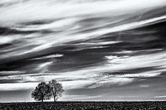 Looking for a Hideaway... (Ody on the mount) Tags: anlã¤sse bã¤ume em5 himmel omd olympus pflanzen schwã¤bischealb wanderung wolken bw clouds monochrome sw sky tree