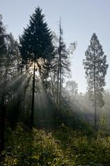 Wschód słońca / sunrise (Adam Żabiński) Tags: światło poranek promienie promienieipromyki promieniesłońca wlesie adamzphotography landscape pejzażkrajobrazwidok słońce