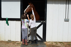 One of the project horses getting lots of attention from the working students