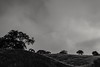 soaking in the silence... (Alvin Harp) Tags: sonyilce7 fe24240mm august 2015 escondido southerncalifornia rollinghills cloudsstormssunsetssunrises morningclouds mono monochrome bwlandscape bw alvinharp