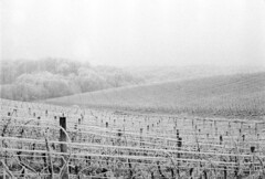 Frosted vineyards (elkarrde) Tags: filmisnotdead filmisalive scanner:brand=plustek scanner:model=opticfilm8100 analoguephotography analogphotography filmphotography analogue film plustek opticfilm8100 plustekopticfilm8100 vuescanx6492 minoltasrt101 minolta srt101 rokkor rokkorpf 5814 minoltamcrokkorpf58mmf14 minoltamcrokkorpf11458mm minoltasrmount srmc camera:brand=minolta camera:model=srt101 camera:format=135 camera:mount=sr camera:mount=srmc lens:brand=minolta lens:model=mcrokkorpf11458mm lens:format=135 lens:mount=srmc agfaphotoapx400 agfa apx400 blackwhite blackandwhite monochrome selfdeveloped semistand standprocess fomadonr09 fomadon 1100 christmas 2016 landscape vineyard frozen jastrebarsko rečkigaj film:brand=agfaphoto film:model=apx400 film:basesensitivity=400asa film:process=bw location:country=croatia location:city=jastrebarsko croatia winter december december2016 winter2016