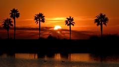 Sunset (.Guillermo.) Tags: puesta de sol sunset árbol palmera tree trees palms cielo sky agua water cádiz andalucía nikon tamron puestadesol paisaje landscape