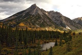 Mount Lorette fall Aspens