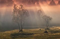 The first rays of the sun (Mirek Pruchnicki) Tags: sun rays morning autumn poland subcarpathian pentax polska jesień