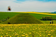 The Hill (Le monde d'aujourd'hui) Tags: silburyhill pyramid neolithic wiltshire mound butterfly dandilions yellow green flowers spring landscape tranquility countryside peace peaceful avebury aveburycomplex hill