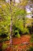 In the forest... (vmribeiro.net) Tags: miranda corvo portugal forest floresta outono fall autumn tree arvore nikon d7000