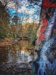 In the woods Tree Nature Forest Autumn Water No People Day Outdoors Beauty In Nature Scenics Tranquility Sky Graffiti Architecture Low Angle View (mikedunnit) Tags: tree nature forest autumn water nopeople day outdoors beautyinnature scenics tranquility sky graffiti architecture lowangleview