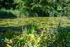 Insel Mainau/Bodensee (karlheinz klingbeil) Tags: pond lake constance plant pflanze teich flower germany blume bodensee insel mainau lakeconstance
