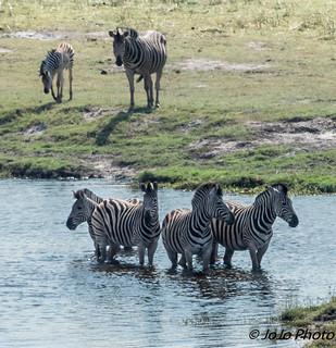 Botswana_2017-68