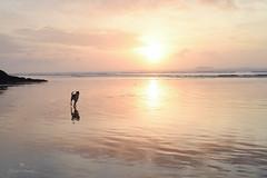 paradise is an empty place (Claudia Künkel) Tags: oregon sunset beach lowtide dog blanca bordercolliemix running