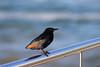 Bird on the Balcony (Rckr88) Tags: bird balcony birdonthebalcony birds plettenbergbay southafrica plettenberg bay south africa sea coast coastal water ocean wave waves travel