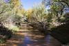 Bushwacking Along the Creek (isaac.borrego) Tags: canyon desert glencanyon nationalrecreationarea escalante utah canonrebelt4i