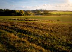 Bucolic (Colin-47) Tags: bucolic countryside field norfolk uk november 2017 colin47 panasonicdmcg80 m43 microfourthirds landscape olympus25mmf18 mzuiko nature