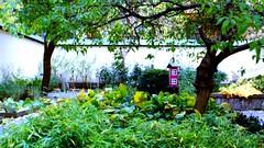 < bird feeder in the church garden > (Mister.Marken) Tags: gc400 kodakgold nikonf4 garden birdfeeder church