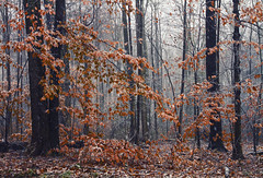 November Snows (Matt Champlin) Tags: november snow snowy cold chilly windy brisk woods woodland swamp trees forest canon 2017 frozen peace peaceful idyllic novembersnows home flx skaneateles auburn mattchamplin nature intothedistance intothewoods