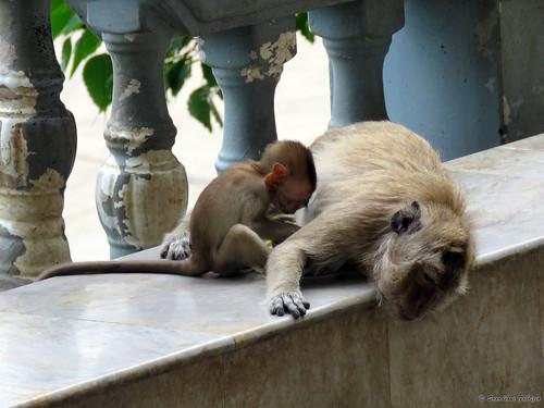 Khao Yoi Cave Tempio delle scimmie Hua Hin