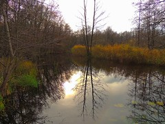 die Schaale im November (Sophia-Fatima) Tags: zarrentin mecklenburgvorpommern deutschland biosphärenreservatschaalsee naturparkelbe schaalsee schaale naturschutzgebietschaalelauf november herbst