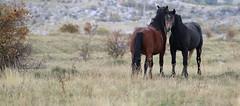 wildlife (Amir Guso) Tags: horse horses bosnia canon eos 70d landscape animal tiere pferd pferde landschaft autumn herbst outdoor travel hiking hike nature natur