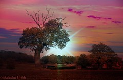 The Tree (M C Smith) Tags: sunset pentax k3 field red green blue shining landscape buildings soil trees clouds