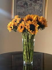 Sunflowers for Thanksgiving (Read2me) Tags: flowers vase table many yellow cye sunflower friendlychallengeunanimouswinner ge challengeclubwinner thechallengefactory pregamewinner