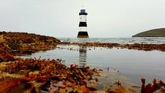 Trwyn Du Lighthouse (mandysp8) Tags: wales anglesey seaweed lighthouse coast sea rocks