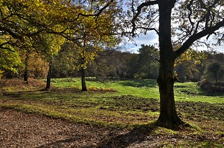 The Forest of Dean, Gloucestershire