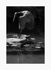 Tilt (bnishimoto) Tags: fuji fujifilm myfujifilm xpro2 hakonegardens saratoga bayarea photoessay 50230mm bw monochrome blackandwhite acros spring