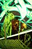 Meow Meo (Georgie_grrl) Tags: graffiti streetart creative colourful expression toronto ontario pentaxk1000 rikenon12828mm crossprocessedfilm velviaasa50
