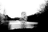 Tervuren (Luc Herman) Tags: tervuren tree lake park belgium black bw boom flanders van