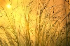 Hot town, summer in the city (Barrie T) Tags: macro grass yellow colour sun summer london garden home