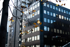 Colors of Winter (Rob₊Lee) Tags: tree leaves winter windows building sky streets