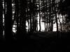 Chartreuse, 2017 (Olivier BERTRAND) Tags: chartreuse blackandwhite blackandwhitephotography digitalphotography neige forest forêt hiver isère landscape monochrome micro43 mountains montagne noiretblanc nature naturallight olivierbertrand paysage panasoniclumix25mm snow trees arbre 25mm lumix25mm olympusem5markii hybridcamera