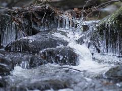 Inchewan burn - Brrr! (grahamrobb888) Tags: nikon nikond800 d800 nikkor85mmf18 nikkor inchewanburn stream water waterspray ice cold cascade scotland highlands perthshire mountainstream wet wetrocks icyrocks