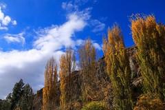 #autumn #nature_photography #landscape_photography #photography #autumn_photography #photooftheday #landscape_captures #photo_art (salam.jana) Tags: autumn naturephotography landscapephotography photography autumnphotography photooftheday landscapecaptures photoart