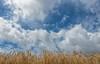 June (Jorden Esser (on a break)) Tags: 2017 june clouds grain sky wheat