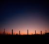 Like Poles Attract (ajecaldwell11) Tags: hawkesbay newzealand sunset ankh silhouette poles awatoto sky dusk celestialcompass caldwell pou light celestial circle