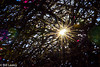 bougenvillia_DSC0043-116065-338 (informalphotography) Tags: bougainvillea branches vines flora sunlight