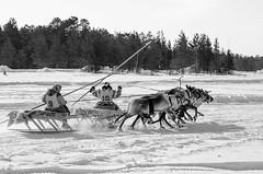 Khanty-103 (Polina K Petrenko) Tags: farnorth russia siberia culture ethnic holiday indigenous khanty localpeople nikon reindeer traditional