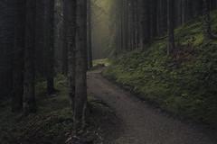 Alpine Path (Netsrak) Tags: alpen at österreich hirschegg nebel bäume moos natur mist fog alps austria kleinwalsertal