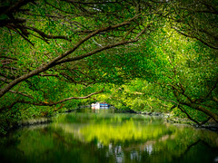 Into The Green Tunnel (Jimweaver) Tags: taiwan tainan taijiang national park rainforest tree green bio river sea stream ship boat culture light mirror water 台江 國家公園 台南 台灣 河 海 溪 四草隧道 光 倒影 船 時光 隧道 生態 森林 樹 水 綠 鏡像 sunny cloudy wood asia 亞洲