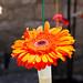 Temps+de+flors_0113