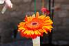 Temps de flors_0113 (Joanbrebo) Tags: girona catalunya españa es tempsdeflors tempsdeflors2017 flors flores flowers fleur fiori blumen blossom canoneos80d eosd efs1018mmf4556isstm autofocus