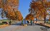 Hazara University, Mansehra (Shehzaad Maroof Khan) Tags: hazara mansehra autumn university campus kpk pakistan road trees fall light nature