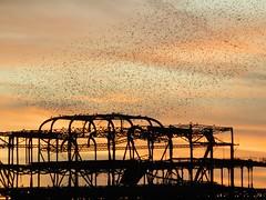 DSCN4805 (loolabub) Tags: murmuration brighton beach sunset southcoast brightonpier starlings seabirds