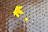 Decending order (maddpete) Tags: leaf water drain manhole wet