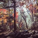 Autumn Forest thumbnail